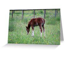 Summer Foal Greeting Card