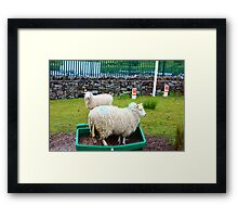 Silly Sheep Framed Print