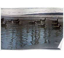 Geese on frosty river Poster