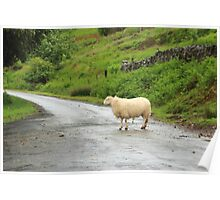 Everybody loves a sheep in the road. Poster