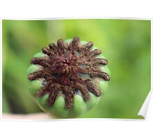 Micro bud poppy seed Poster
