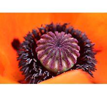 Poppy seed life Photographic Print