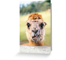 Funny Alpaca Greeting Card