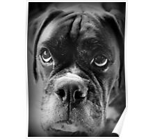 Oh Please... Let It Rain Cookies ~ Boxer Dog Series ~ Poster