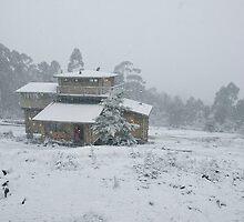 winter is coming by Alenka Co