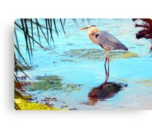 Great blue under palm Canvas Print