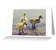Cute Goslings Greeting Card