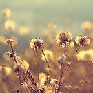 Cotton Wool Heather by LittlePhotoHut