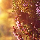 Purple Heather by LittlePhotoHut
