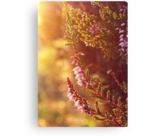 Purple Heather Canvas Print