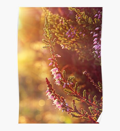 Purple Heather Poster