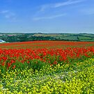 Primary Panorama by mikebov