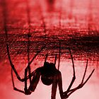 Spider red by Mats Gustafsson
