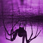 Spider purple by Mats Gustafsson