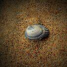 Shell by Susan Zohn