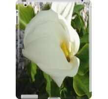 A Large Single White Calla Lily Flower iPad Case/Skin