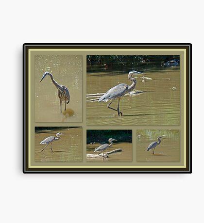 Great Blue Heron - Ardea herodias Canvas Print