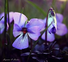 The Color Purple by Susan C. Snider