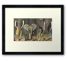 Samburu Elephant Youngster Framed Print