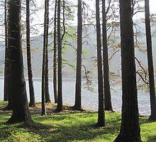 Through the Trees by Jennifer J Watson