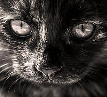 Kitten by Minna  Waring