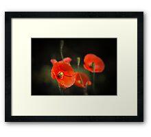 Poppies enjoying the sun... Framed Print