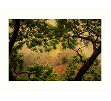Framing Tree Branches Art Print