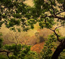 Framing Tree Branches by JennyRainbow