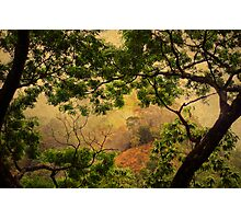 Framing Tree Branches Photographic Print