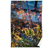 Multi coloured leaves Poster