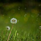 Natures Influential Breeze by Matthew Ellerington