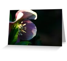 Anenome Flower Greeting Card