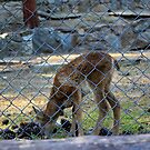 born in captivity by mkokonoglou
