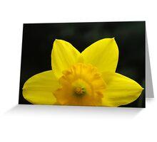 Bashful-dil Greeting Card