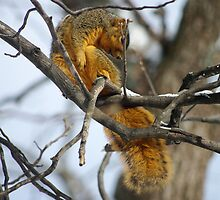 'Does My Tail Look Fat?' by Shari Rucker