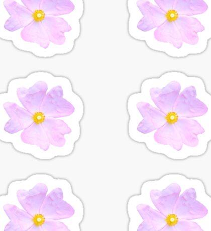 Pale Pink Flower Sticker