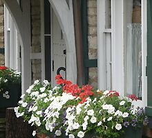 Pansies in the Windowbox by PicsbyJody
