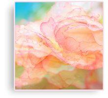 Begonia Love... Canvas Print