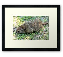 Gregarious Groundhog Framed Print