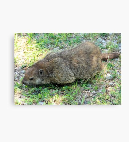 Gregarious Groundhog Canvas Print