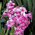 Pink by teresa731