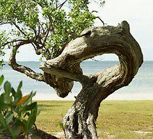 Wicked Wood by Scott Dovey