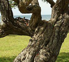 """""""Tiny"""" Tree Trunk by Scott Dovey"""