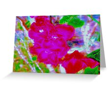 Red sword lily flowers Greeting Card