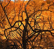 burnt bush looks like burning bush by Tim Horton