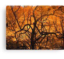 burnt bush looks like burning bush Canvas Print