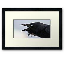 Australian Raven (Corvus Coronoides) Framed Print