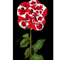✿♥‿♥✿CANADIAN PATRIOTIC ROSE IPHONE CASE✿♥‿♥✿ by ✿✿ Bonita ✿✿ ђєℓℓσ
