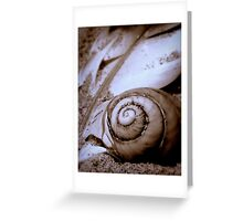 Seashell and Gull Feather  Greeting Card