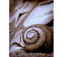 Seashell and Gull Feather  Photographic Print